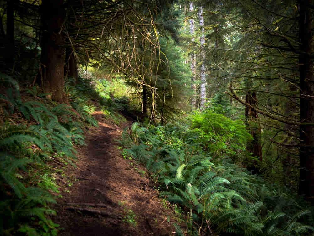 Neahkahnie Mountain trail