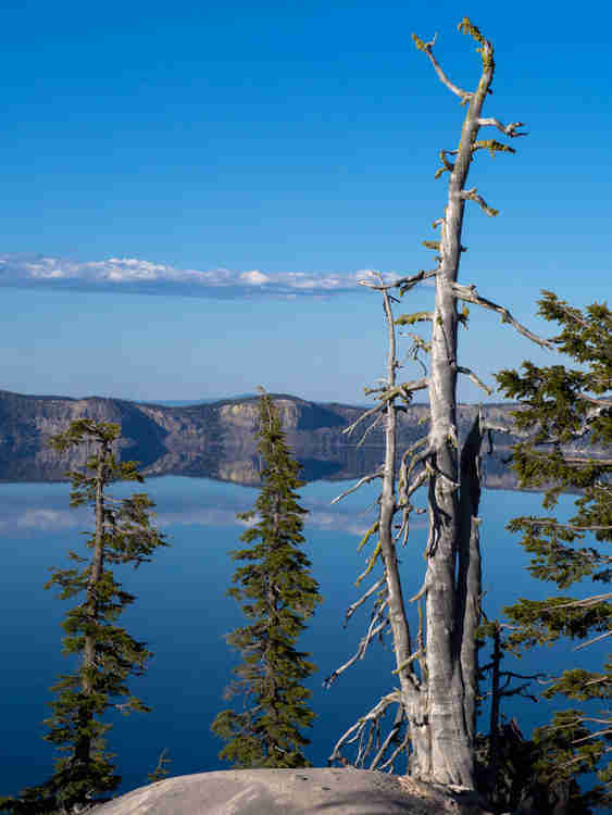 Tree at Crater Lake
