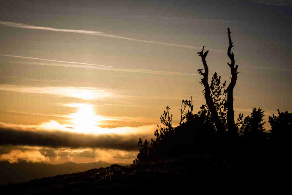 Sunset and tree silhouette at Crater Lake National Park